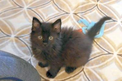 Adopt a Pet | Moonshine