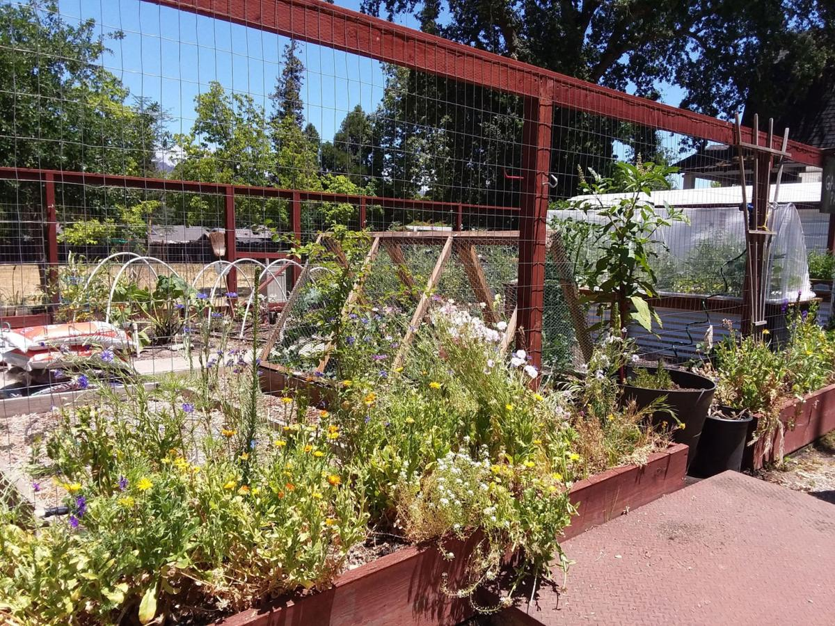 Rancho de Calistoga Community Garden