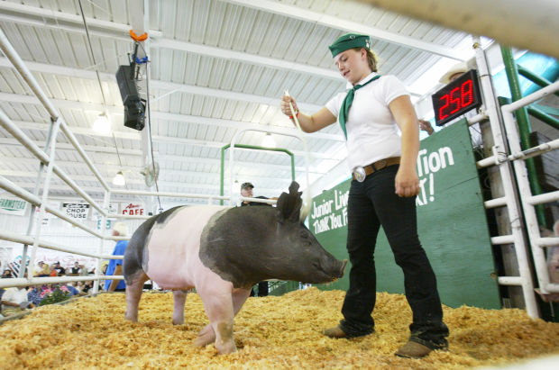 Junior Livestock Auction Draws A Crowd The Weekly Calistogan