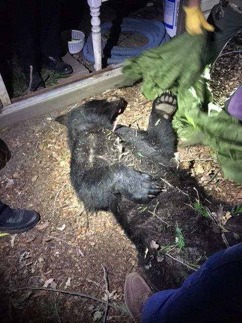 Bear rescued from tree in Napa