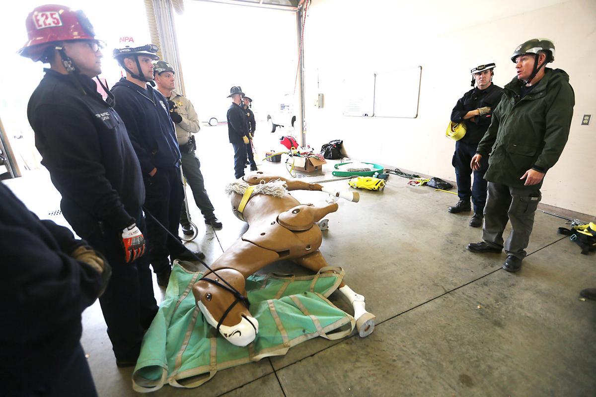 Large Animal Rescue Training