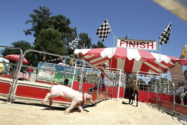 GASCAR interspecies racing