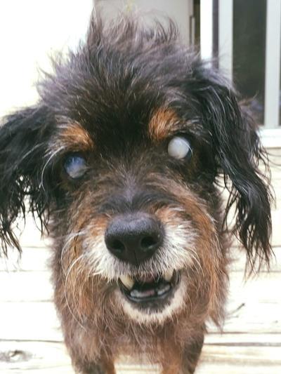 Adopt a Pet | Frankie