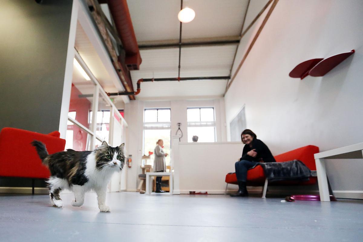 Ella's CatHouse & Catnip Bar