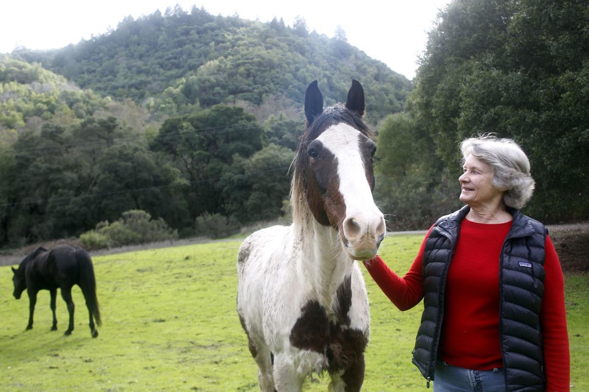 Moffitteasement w horse