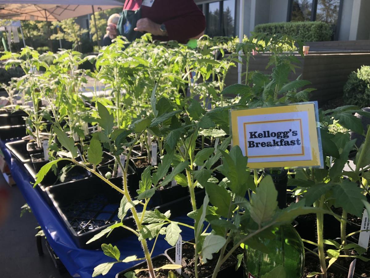 UC Master Gardeners 2019 Tomato Plant Sale