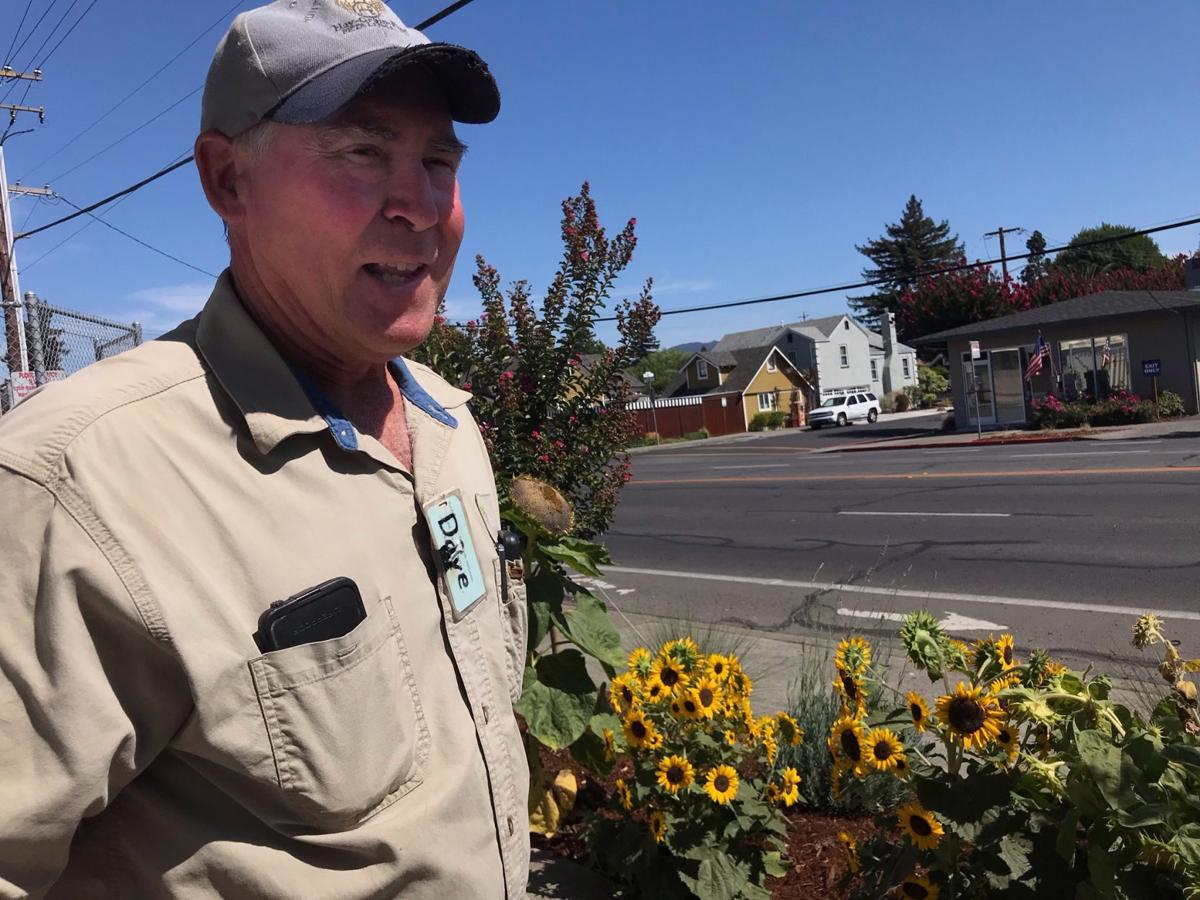 Dave Gevas with a selection of sunflowers along Lincoln Avenue in Napa.