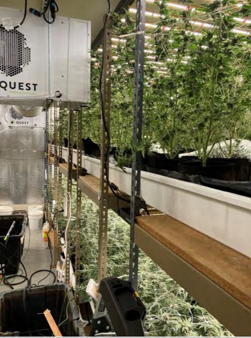 American Canyon cannabis grow