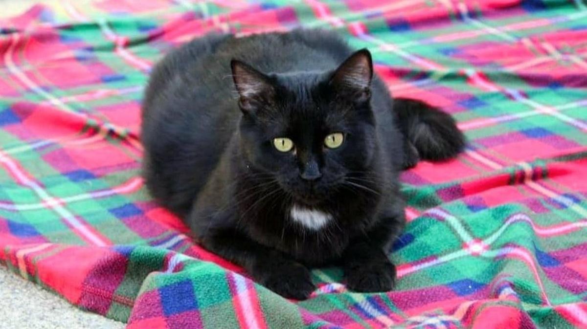 Adopt a Pet | Gracie