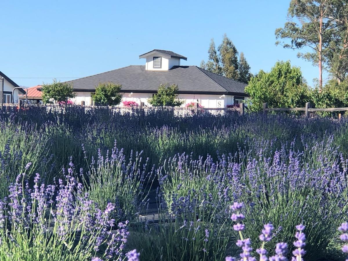 Charsaw Lavender Farm