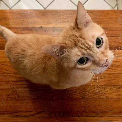 Adopt a Pet | Slick