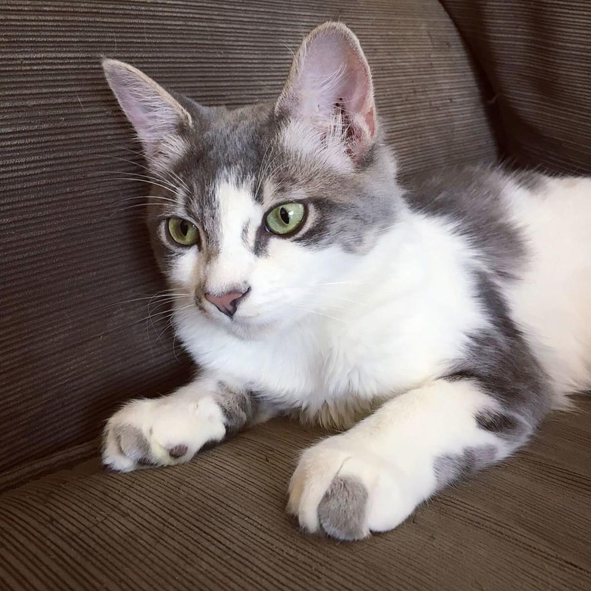 Adopt a Pet | Millie