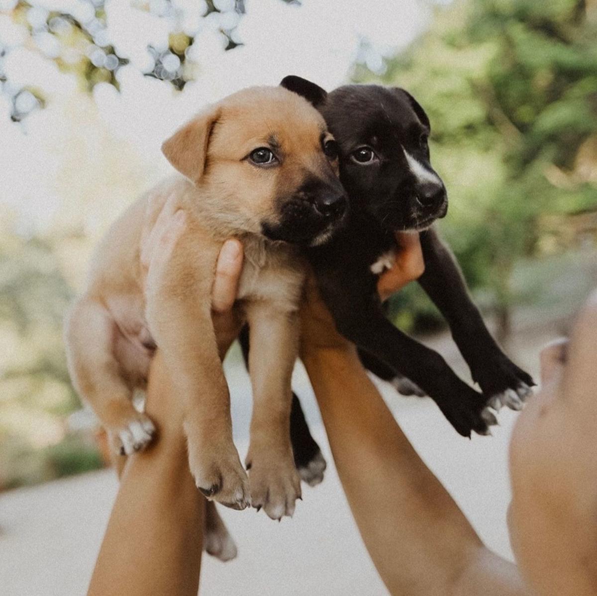 Adopt a Pet   Herschel & Harrison