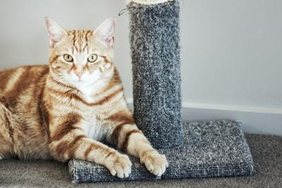 LIFE-PETS-CATS-SCRATCHING-DMT