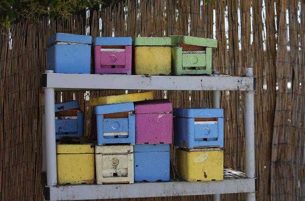 Bee population drops