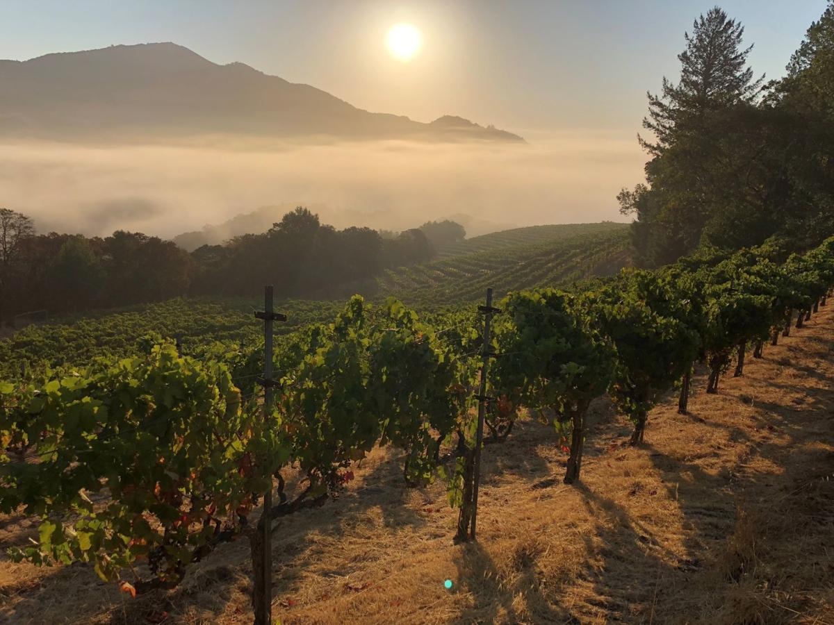 Pym-Rae: From Pauillac to Mount Veeder | Wine ...