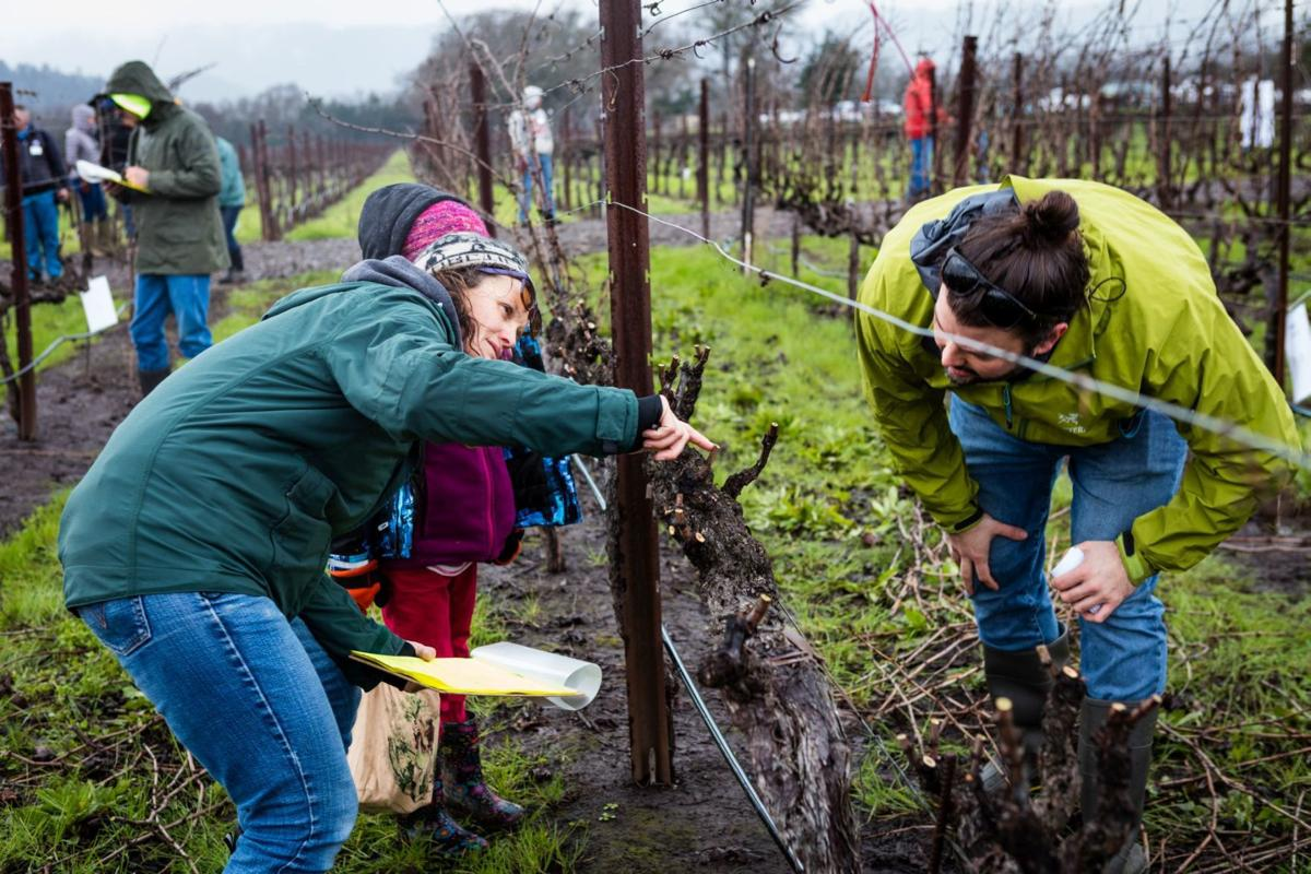 Napa County Pruning Contest