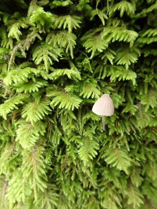Moss and Fungi Sutro