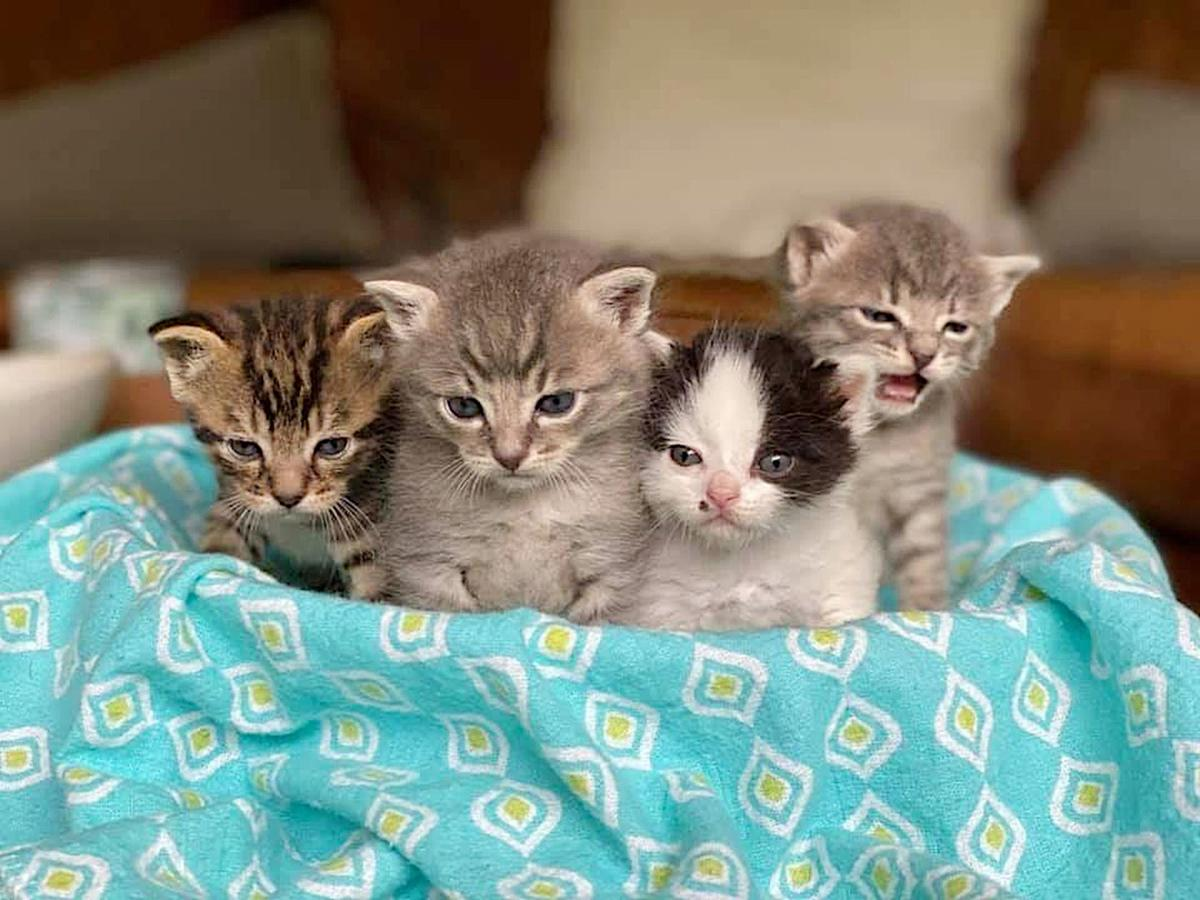 Adopt a Pet | Kittens coming soon