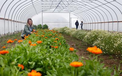 Classic to exotic: Idaho's Purple Sage Farms grows culinary herb wonders