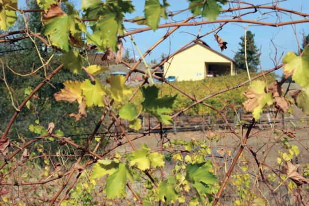 Exploring the El Dorado County wine region