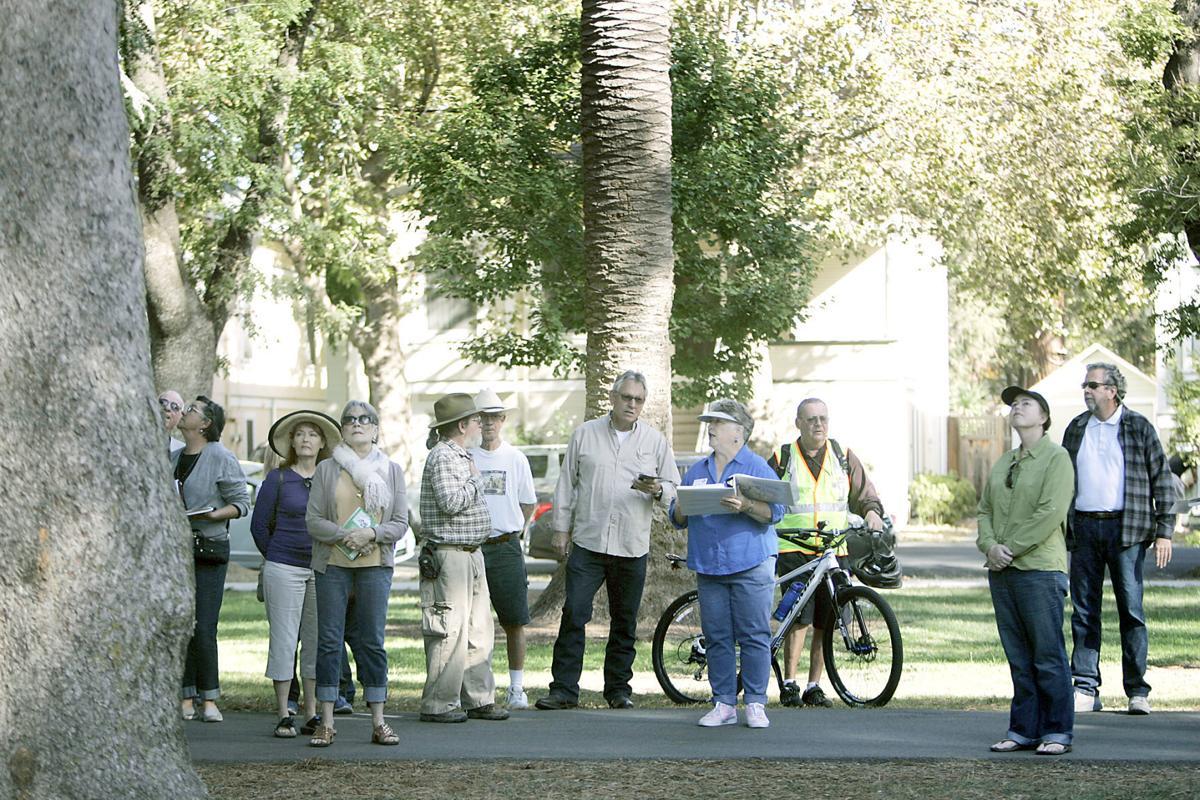 Fuller Park tree tour in Napa