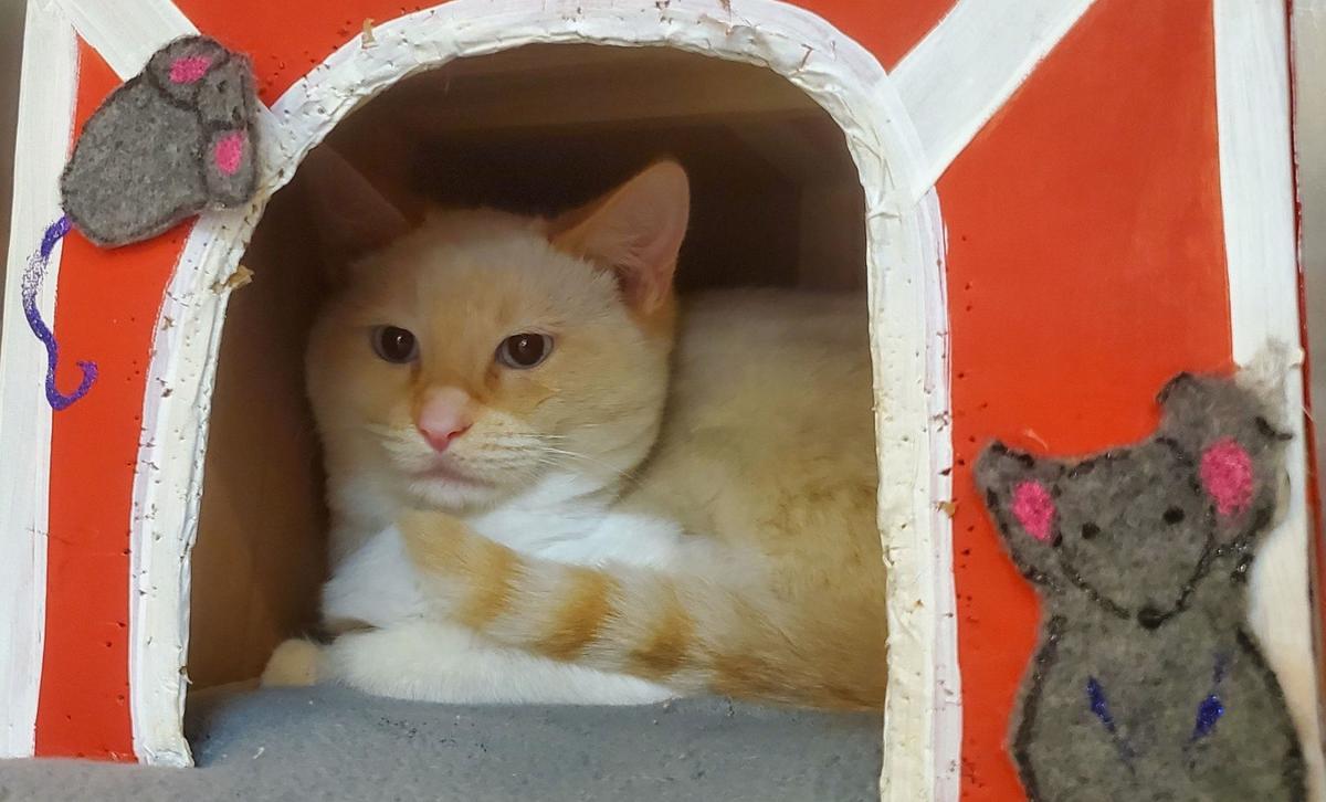 Adopt a Pet | Schultz