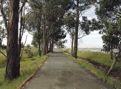 AmCan trail