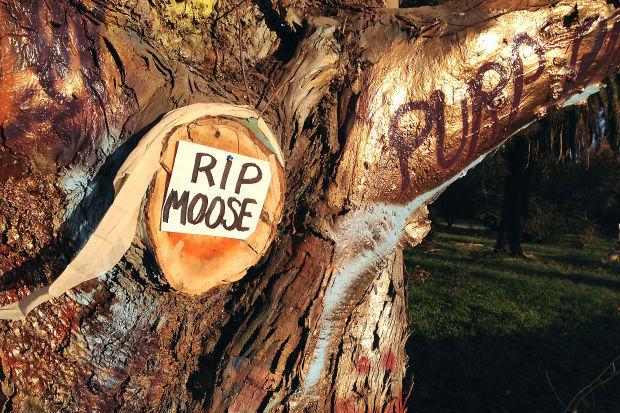 Napa Moose Tree Head Removed