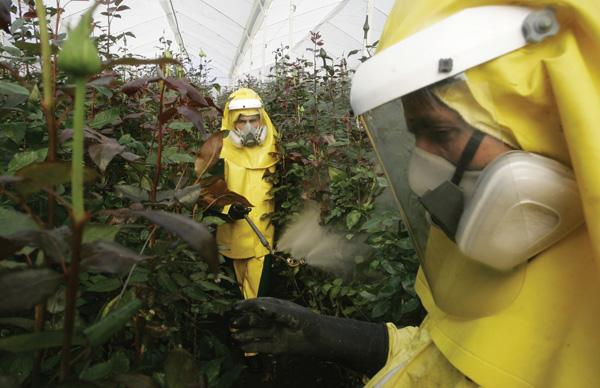 Colombian flower growers struggle to cut pesticide use