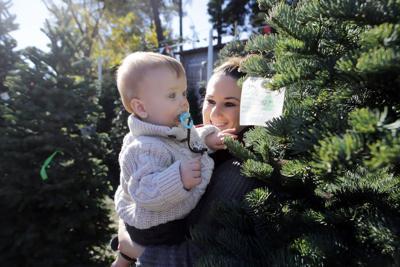 Christmas tree lots in Napa
