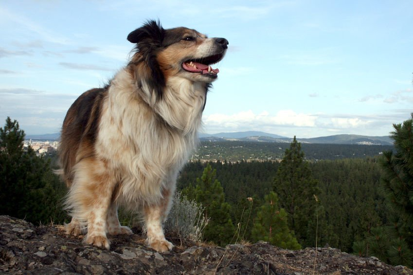 Dog Friendly Places in NC's Marvelous Mountain Region (image)