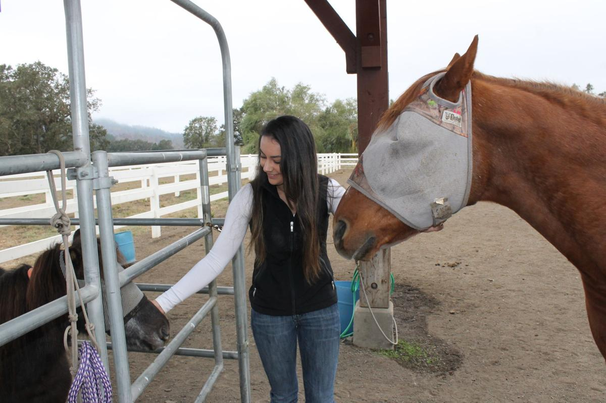 At Sunrise Horse Rescue