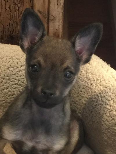 Adopt a Pet | Clyde