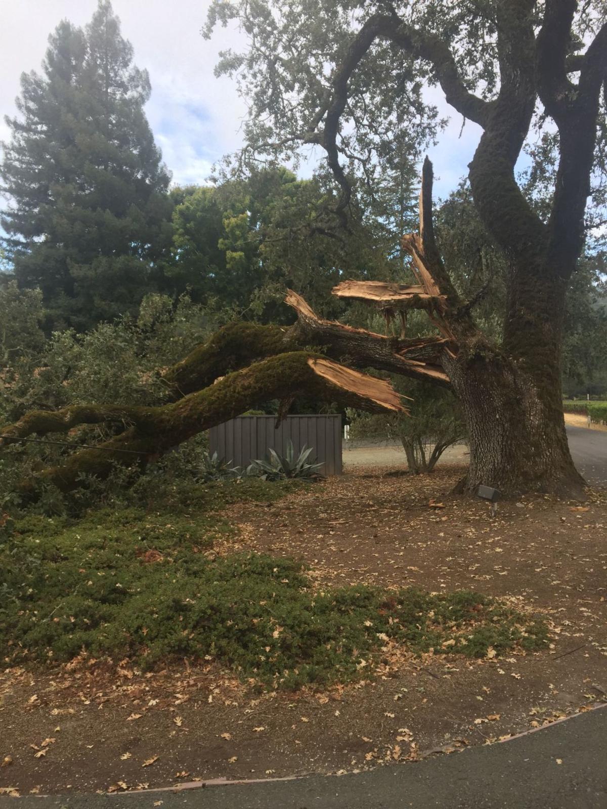 Oak branch crashes down