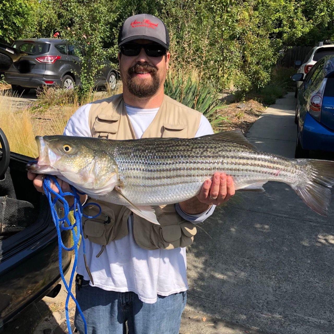 Bear Stripers napa valley fishing report: stable weather means stripers in