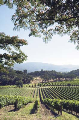 How Napa's Ag Preserve beat the odds, and saved the valley