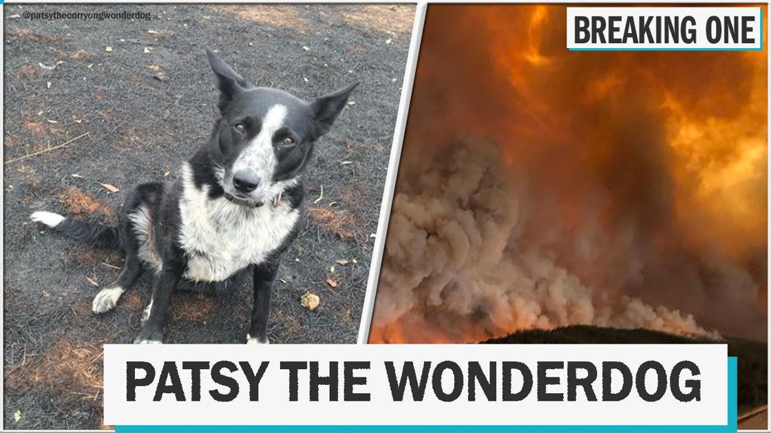 Heroic sheepdog saves her flock, royal drama, and more things you might have missed this week
