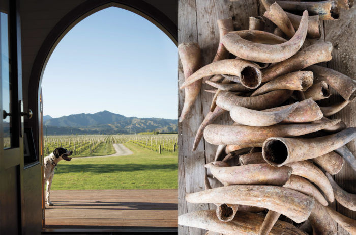 An Eco-Friendly Wine Tour of New Zealand's South Island