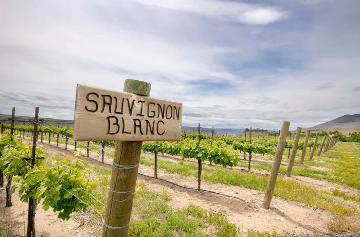 10 Sauvignon Blancs for Under $30