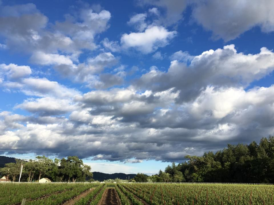 Madrigal Family Estate Vineyard Elizabeth Smith.jpg