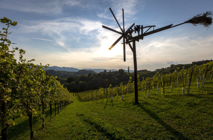 Get to Know Austria's Wine Regions