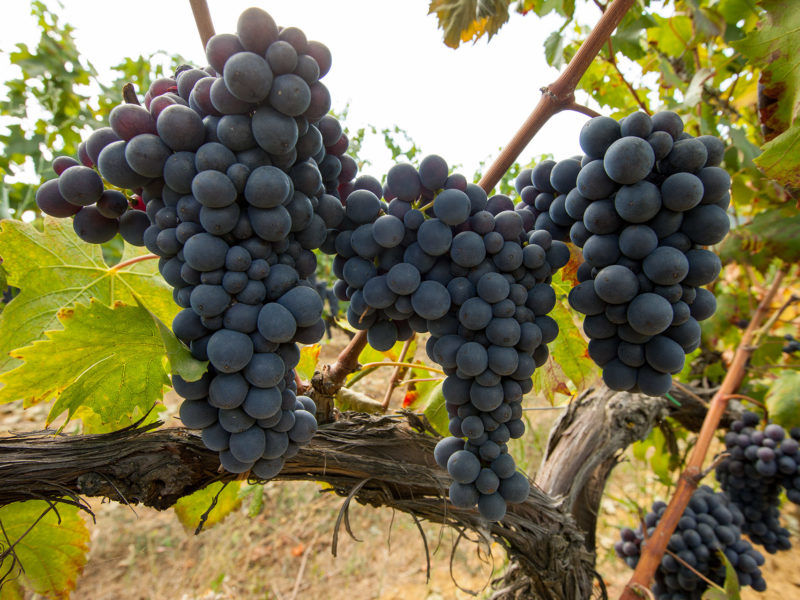 The 13 Highest Scoring Pinot Noirs We Rated in 2018