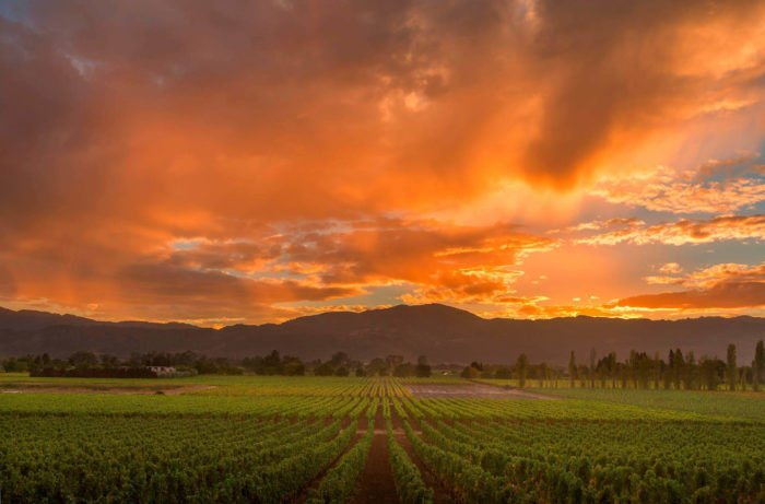 California Cabernets for Your Cellar