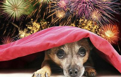 PET TALK: Keep your pets safe this Fourth of July
