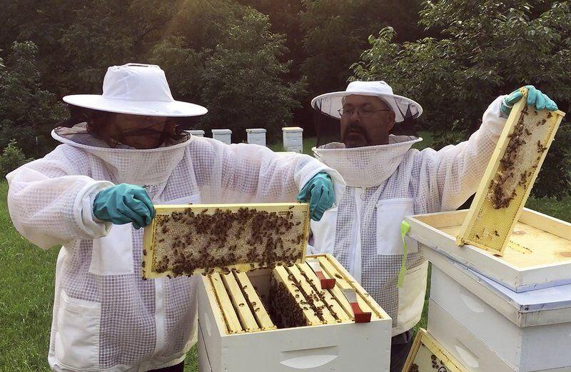Beekeeping workshop creates hive minds