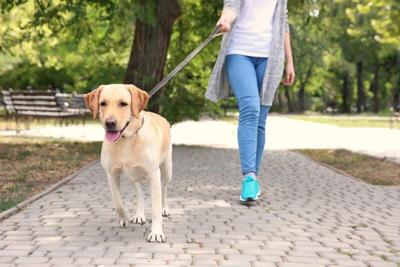 PET TALK: Exercise with your pet this new year