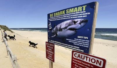 Cape Cod officials warn of white sharks