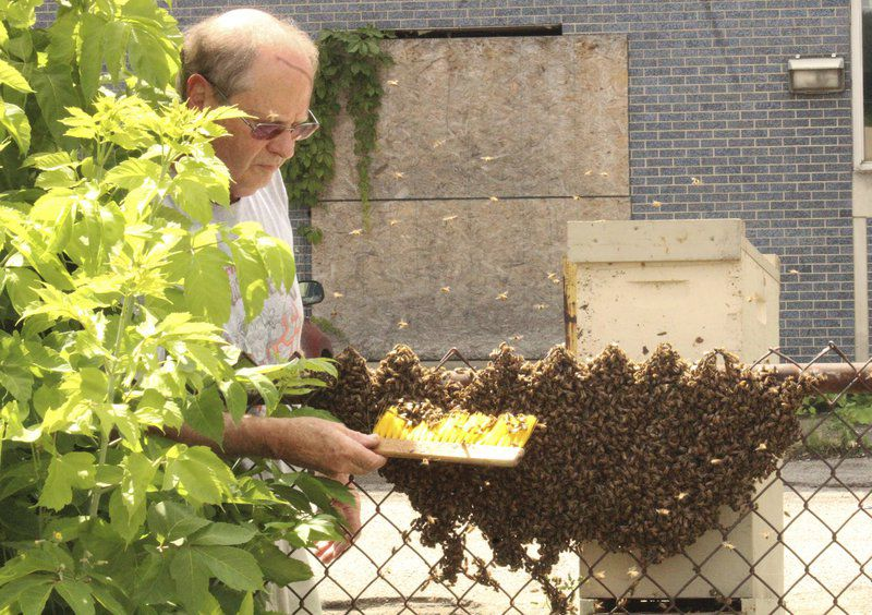 Bees swarm downtown alley