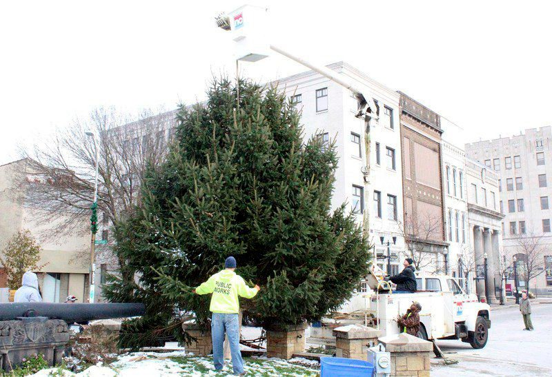 30-year-old sapling graduates from backyard to downtown